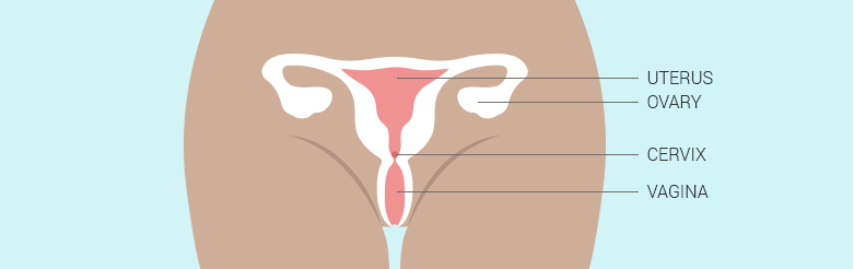 cervix_diagram